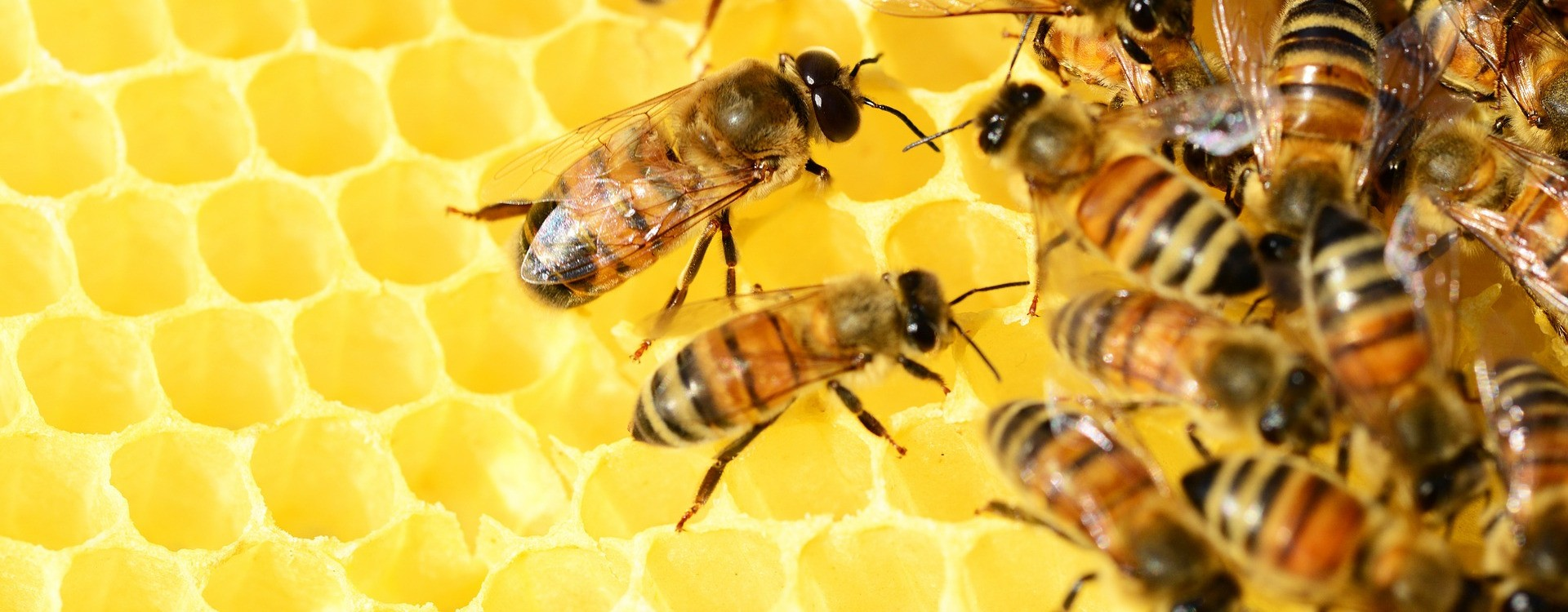 Mesilasvaha ja mesi seebis ja kosmeetikas